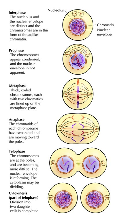 Cell Reproduction And Heredity